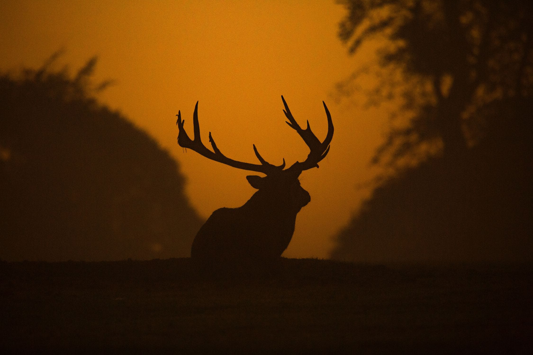 Deer Hunting 101 Why Some Hunters Succeed Others Don T